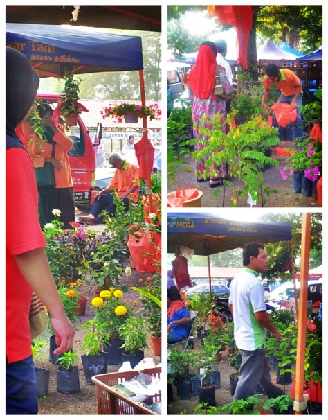Potted Plants and Flowers at Pasar Tani