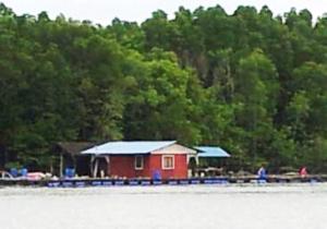 Fish farm at Kampung Kong Kong Laut, a home at sea (@all rights reserved)