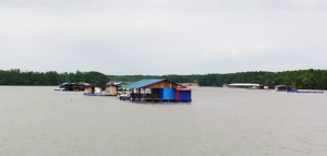 Floating fish farms at the estuary off Kampung Kong Kong Laut (@all rights reserved)