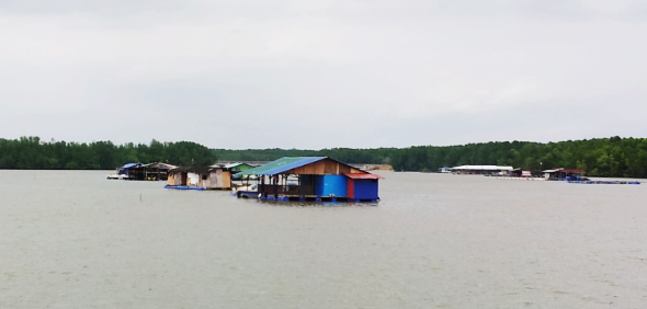 fish farms at kong kong