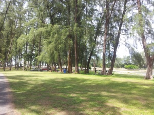 The woods of Kuala Ibai at Kuala Ibai Lagoon. (@ all rights reserved)