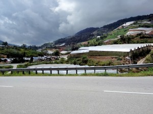Vegetable farms can be seen almost on every piece of land available in Bertam Valley. (@ all rights reserved)