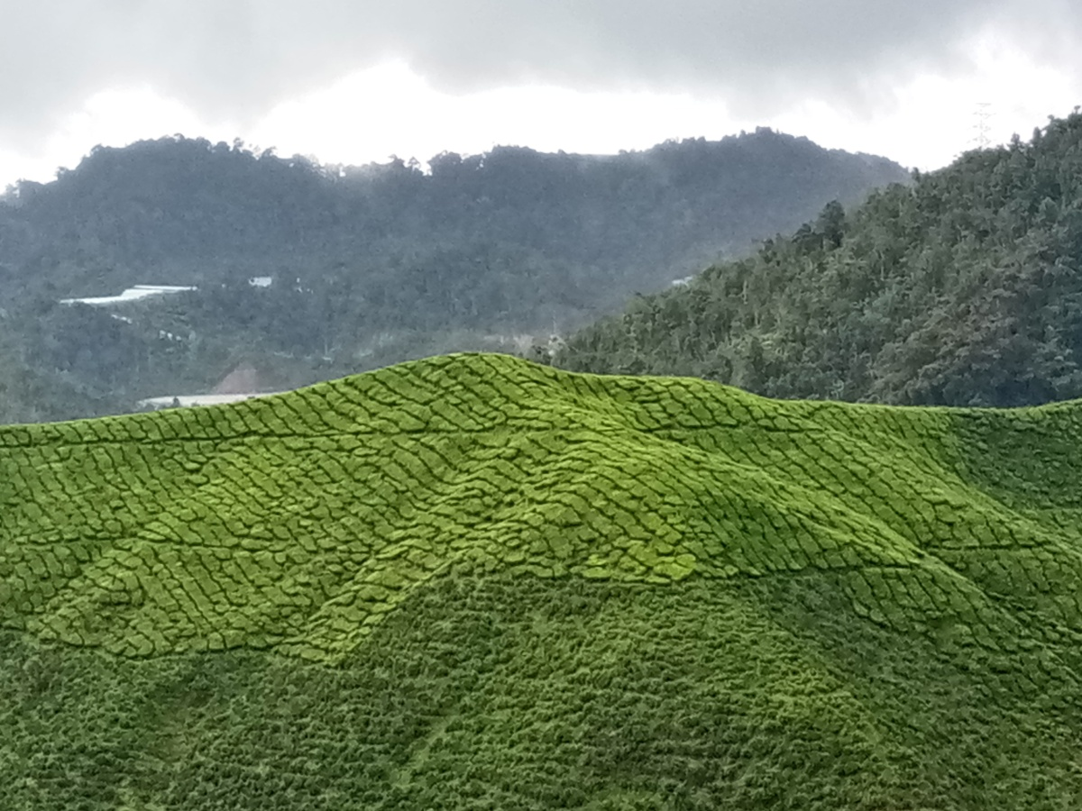 Discovering Cameron Highlands